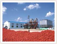 خط إنتاج معجون الطماطم